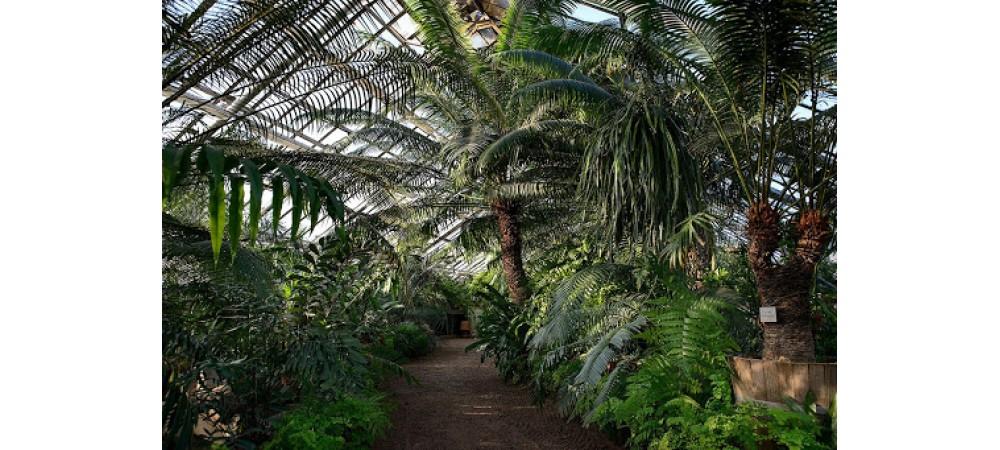 Сады и парки Петербурга